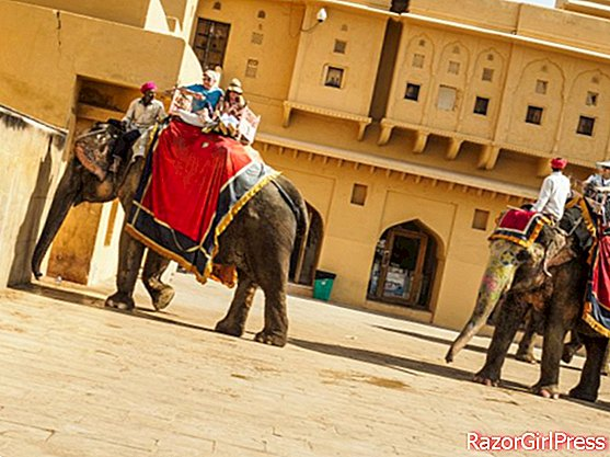 Beware of the risk of tuberculosis if you take a ride on an elephant