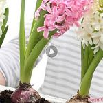 Plant your bulbs in autumn for a flowering spring